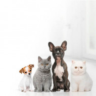 GLOBAL STORE - online shopping store for pet care products